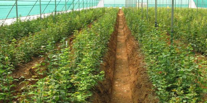 promotes protected cultivation