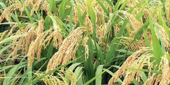 Multistoried Cropping System: A promising technology