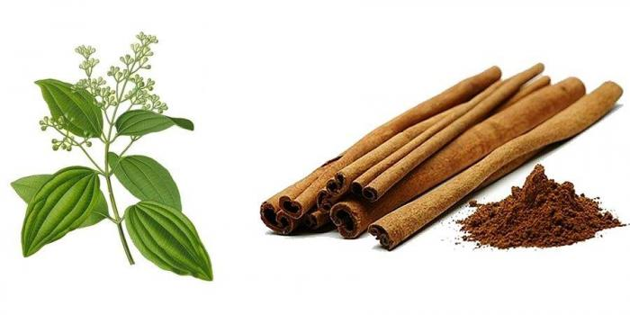 CINNAMON CULTIVATION IN INDIA