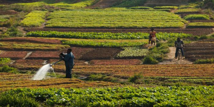Healthy soils are the foundation of food production