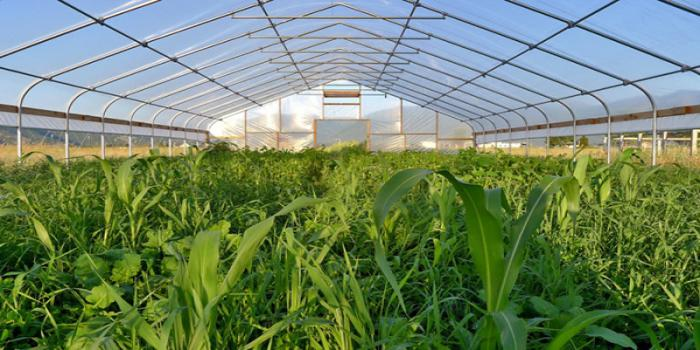 Vegetable Production under Protective Structure