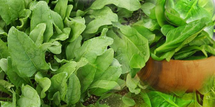 spinach                  agricare.org